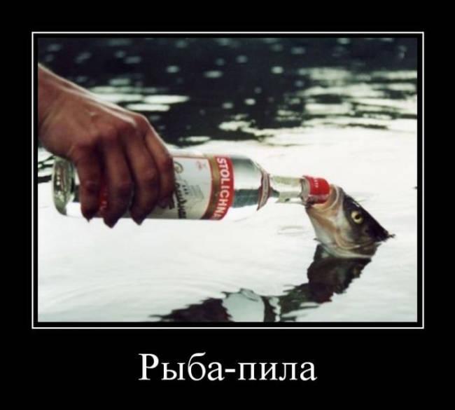 Картинки прикольные про рыбалку и рыбу