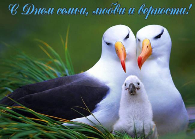 Красивые и прикольные открытки с Днем семьи любви и верности