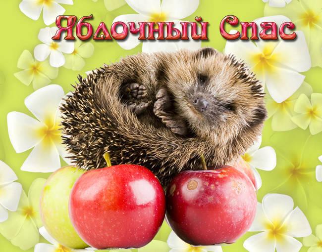 Открытки с Яблочным Спасом бесплатно скачать