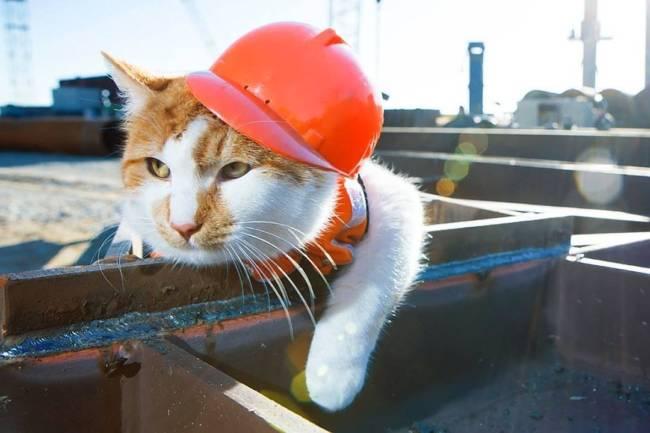 Прикольные картинки ко Дню строителей