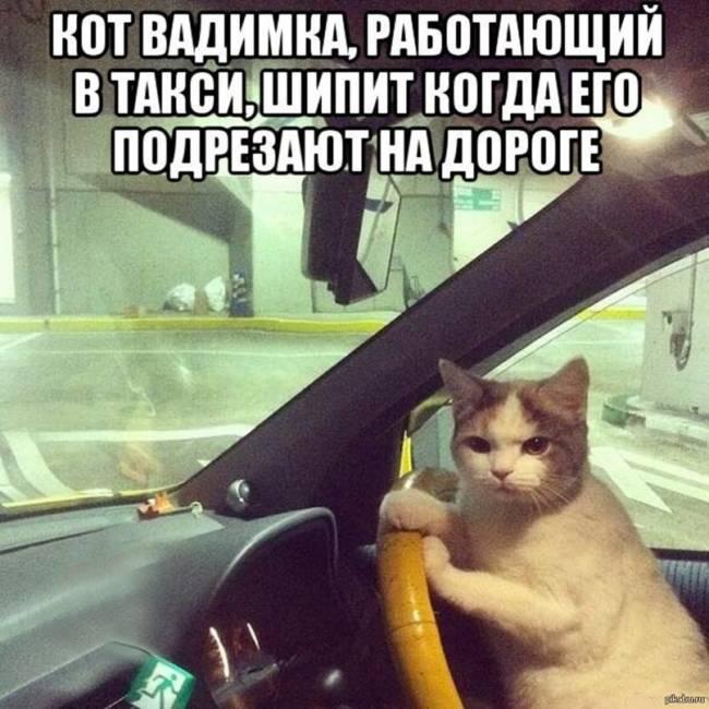 Ржачные картинки ко дню автомобилиста