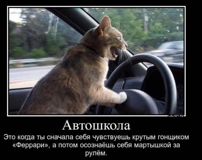 Смешные и прикольные картинки ко Дню автомобилистка