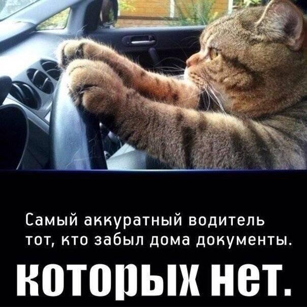 Картинки ко Дню автомобилиста прикольные и смешные