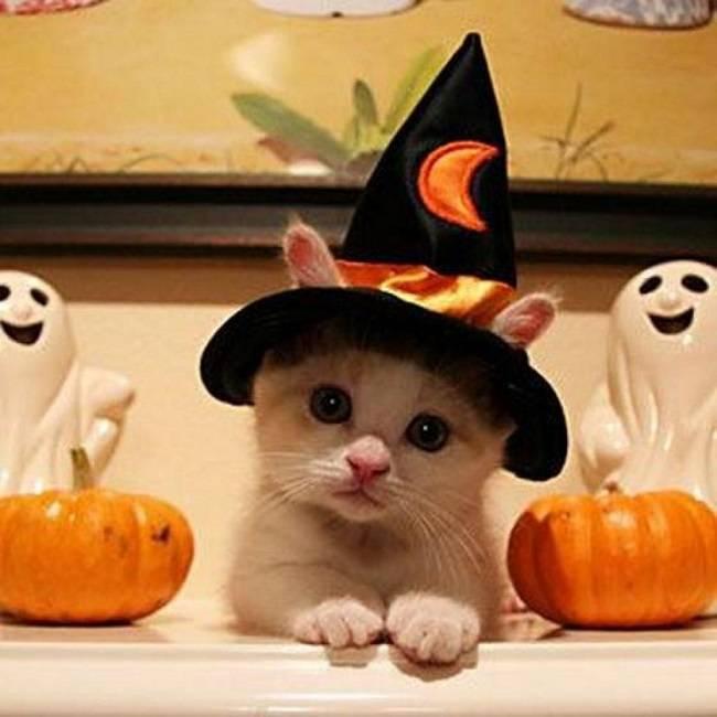 Коты и Хэллоуин прикольные картинки