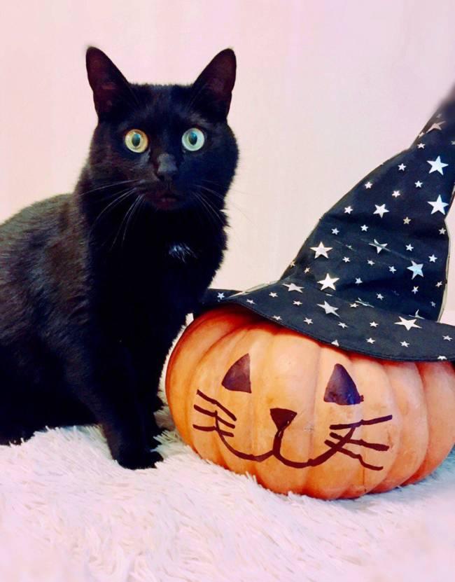 ПРикольные картинки про Хэддоуин с кошками
