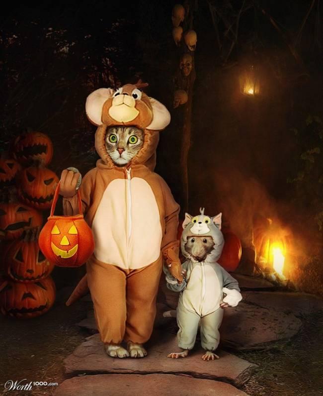 Картинки прикольные на Хэллоуин скачать