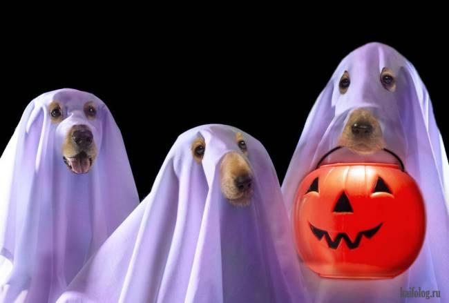Прикольные картинки про Хэллоуин