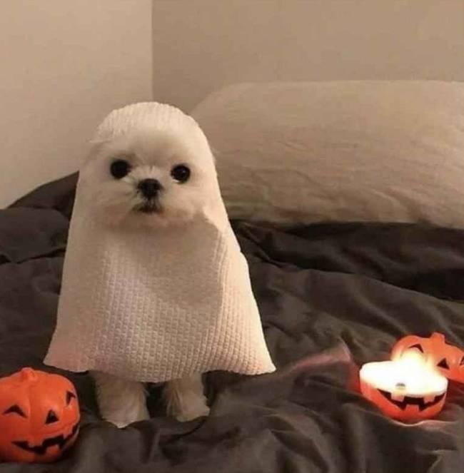 Прикольные и смешные картинки про Хэллоуин
