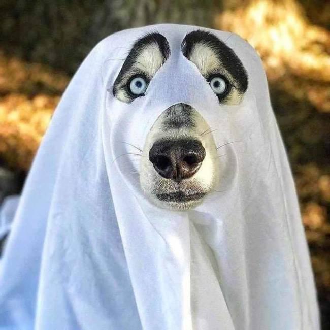 Картинки про Хэллоуин прикольные