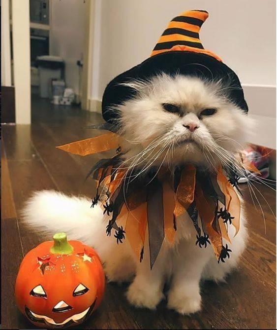СМешные коты на Хэллоуин картинки