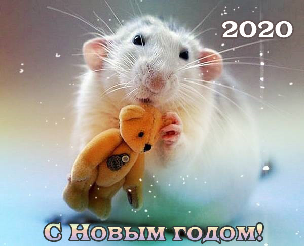 Открытки с Новым годом Крысы скачать