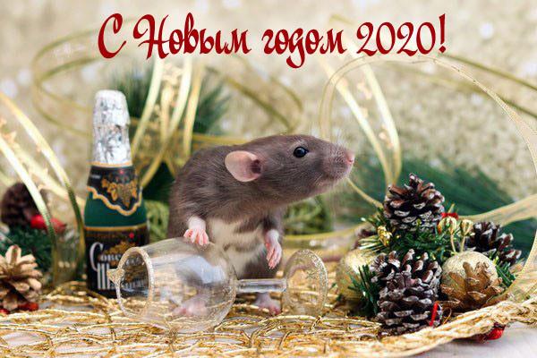 Красивые и прикольные открытки с Новым годом (45 штук)