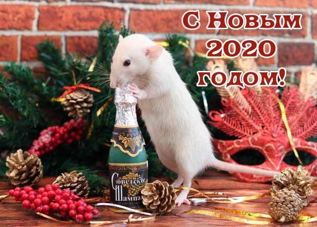 С Новым годом Крысы открытки прикольные