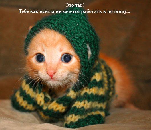 Картинки кот пятница