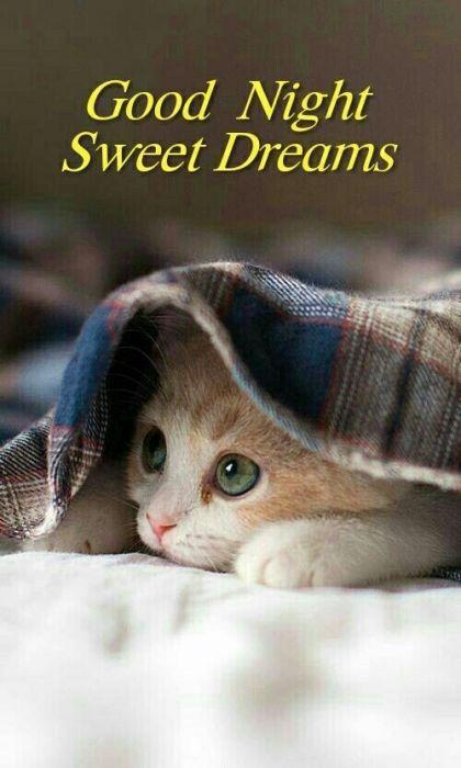 картинки с пожеланиями доброй ночи