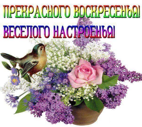 Воскресенье пожелание хорошего дня картинки