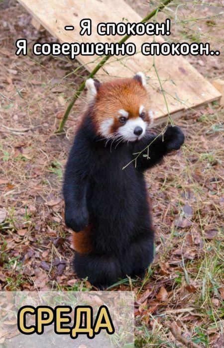 Картинки с животными среда