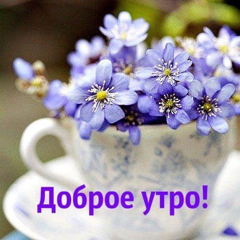 Доброе утро хорошего дня