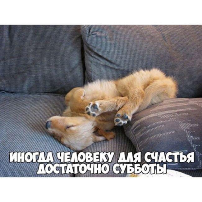 Доброе утро суббота смешные картинки