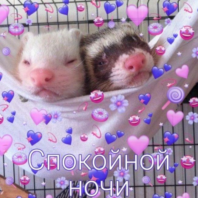 Пожелания спокойной ночи женщине красивые