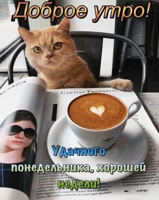 Доброе утро хорошего дня понедельника