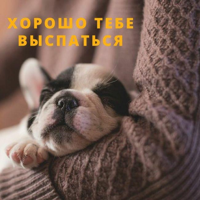 Прикольные пожелания спокойной ночи
