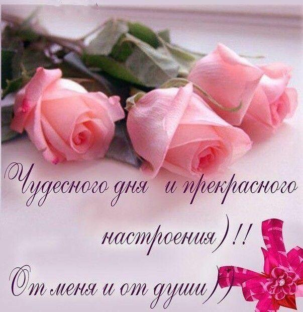 Доброе утро розы