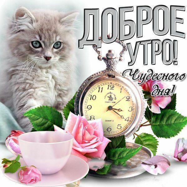 Доброе утро прекрасного дня