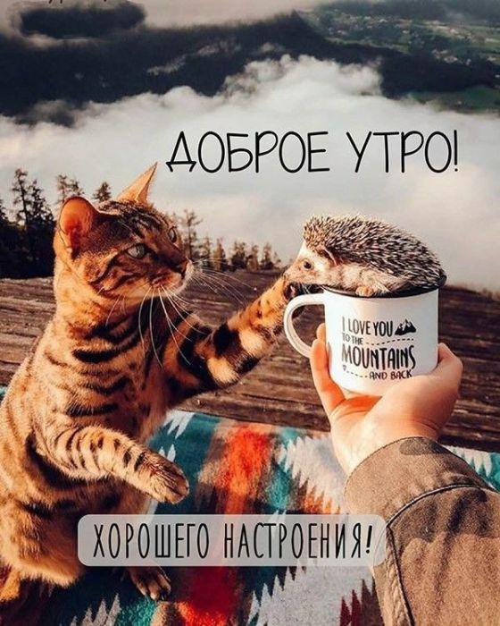 Доброе утро и хорошего дня новые