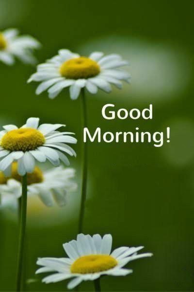 Доброе утро новые красивые