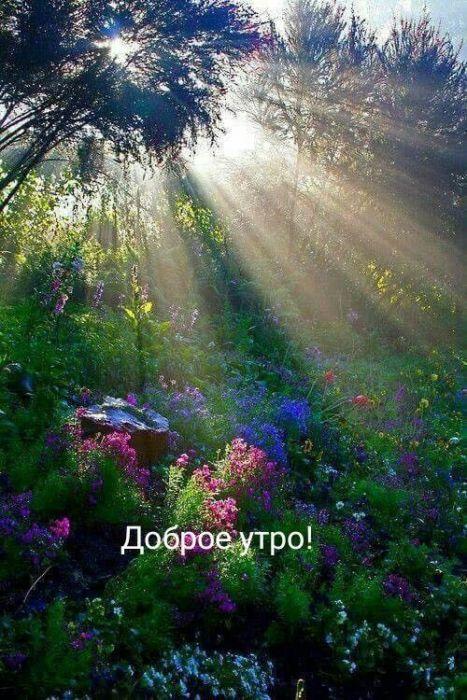 Открытки с добрым утром с природой