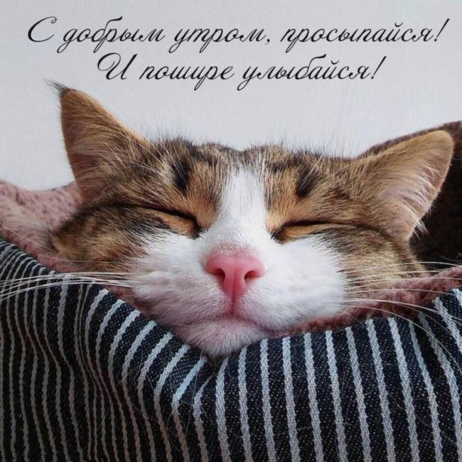 Доброе утро котенок