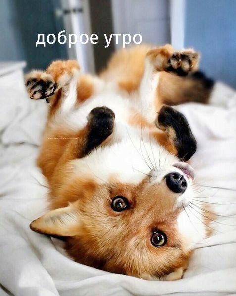 Доброе утро картинки с животными