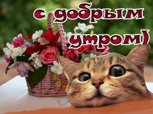 Доброе утро веселые