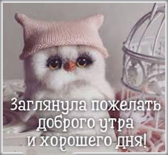 Доброго утра хорошего дня прикольные