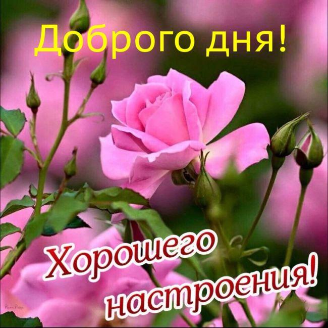 Пожелания с добрым утром хорошего настроения