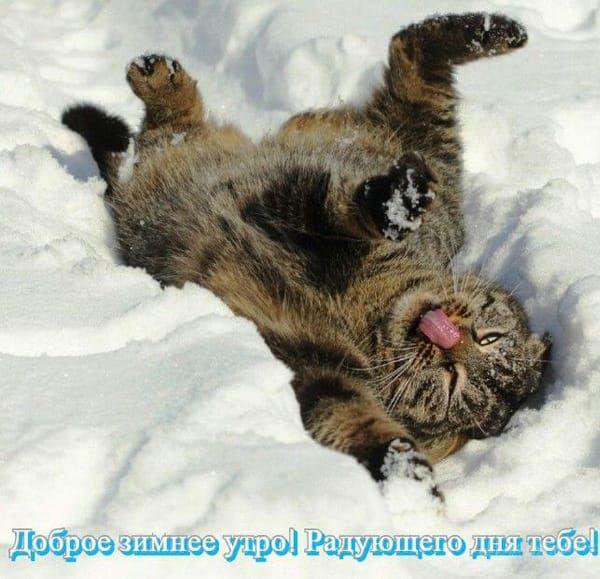 Скачать картинку зимнее утро