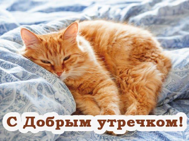 Доброе утро с животными