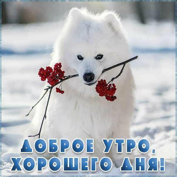 Зимние картинки с добрыми пожеланиями