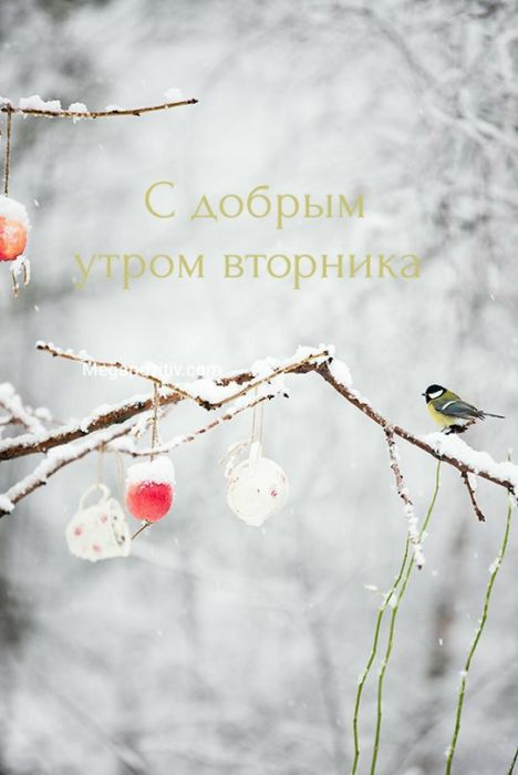 Доброе утро вторника картинки зимние