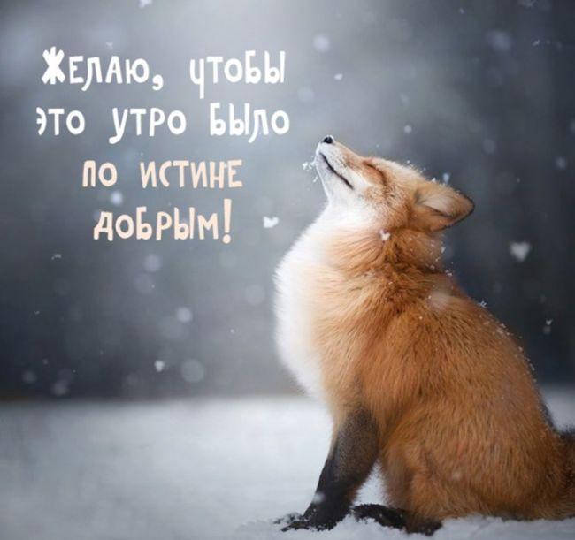 Доброе утро картинки позитивные зимние
