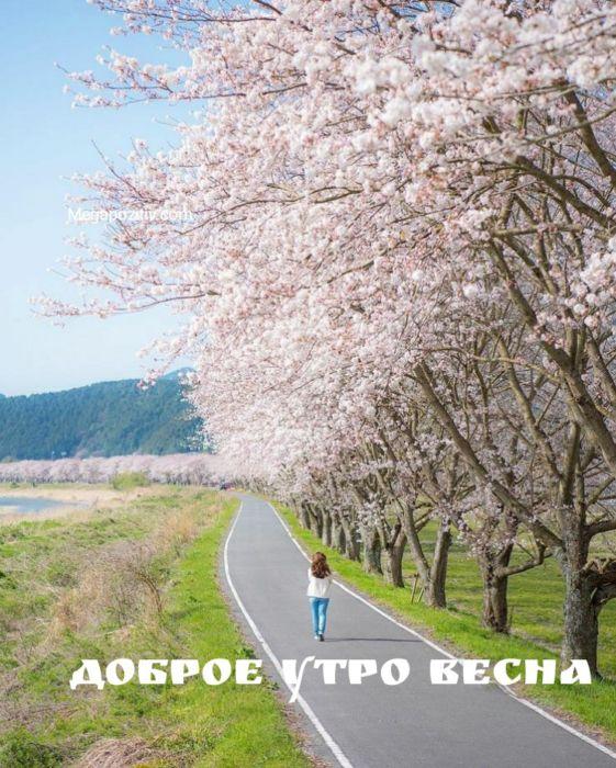 Скачать доброе утро весна