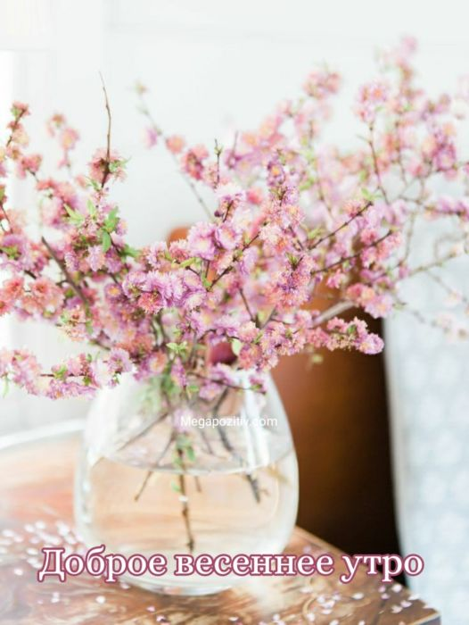 Доброе утро картинки весна