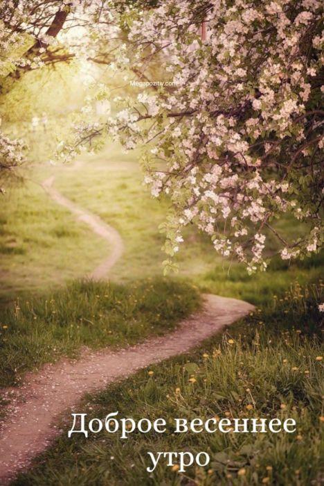 Доброе утро природа весна