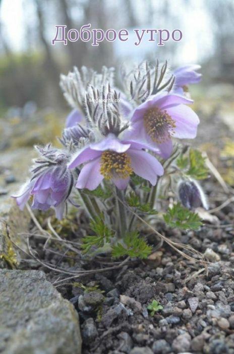 Доброе утро цветы весна