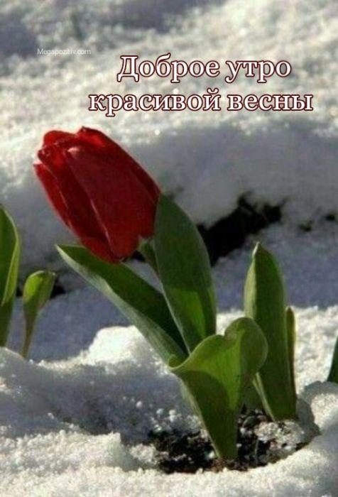 Доброго утра красивой весны