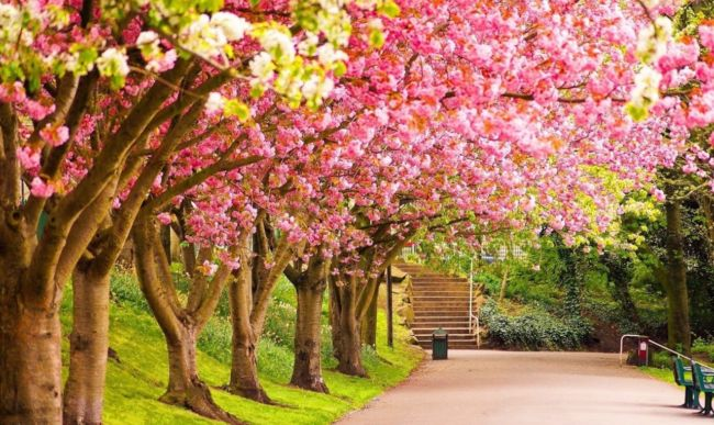 Красивые весенние картинки
