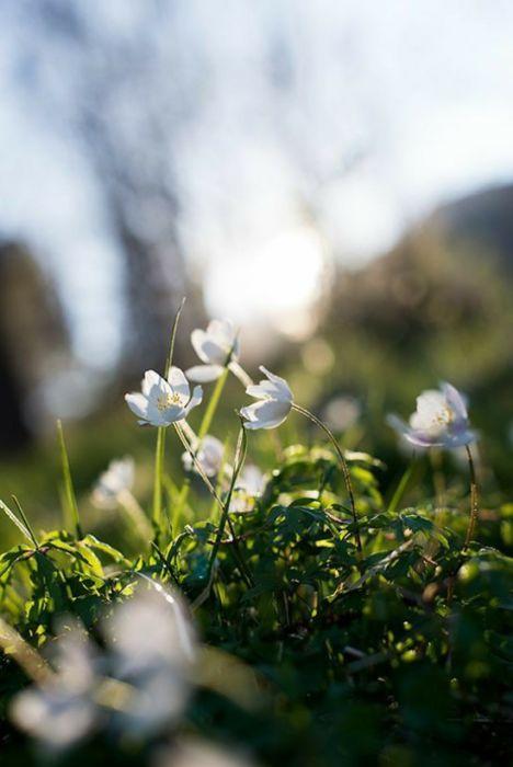 Красивые весенние цветы картинки