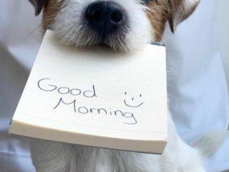 Доброе утро любимому